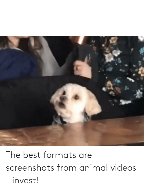 Animal Videos: The best formats are screenshots from animal videos - invest!