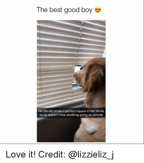 Love, Memes, and Best: The best good boy e  He literally broke a perfect square in the blinds  so he doesn't miss anything going on outside Love it! Credit: @lizzieliz_j