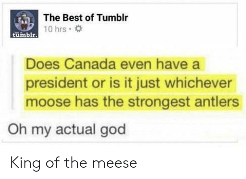 moose: The Best of Tumblr  tumblrT0 hrs  Does Canada even have a  president or is it just whichever  moose has the strongest antlers  Oh my actual god King of the meese