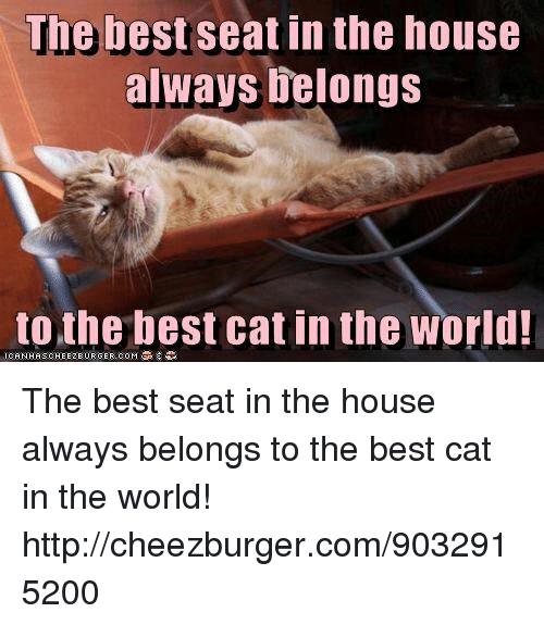 Best, House, and Http: The best seat in the house  always elongs  to the best cat in the world The best seat in the house always belongs  to the best cat in the world! http://cheezburger.com/9032915200
