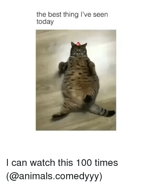 Anaconda, Animals, and Funny: the best thing I've seen  today I can watch this 100 times (@animals.comedyyy)