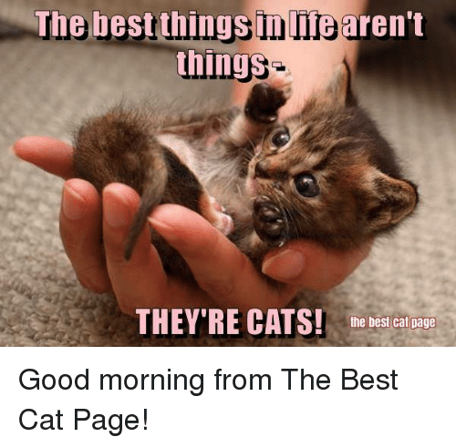 Memes, Best Cat, and 🤖: The best things inlifearen't  things  THEY'RE CATS! the best cat page Good morning from The Best Cat Page!