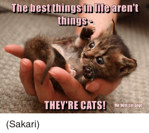Memes, Best Cat, and 🤖: The best thingsinlifearen't  things  THEY'RE CATS! the best cat page (Sakari)