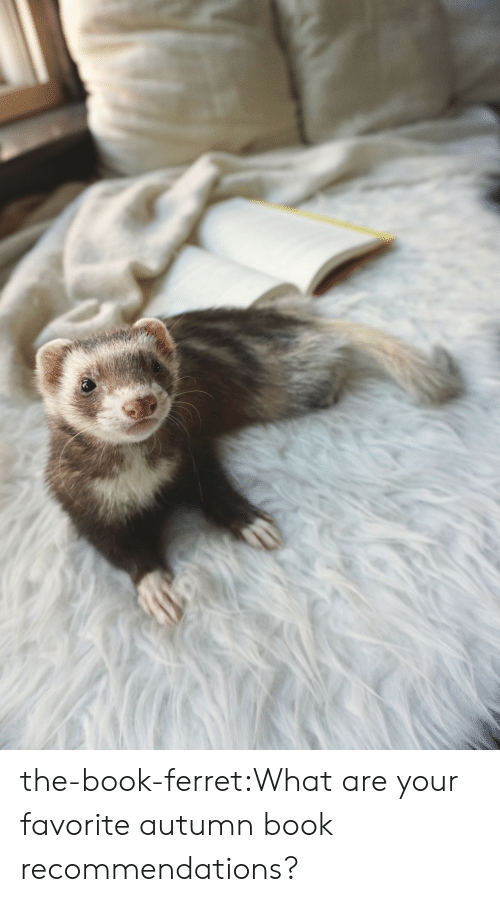 Ferret: the-book-ferret:What are your favorite autumn book recommendations?