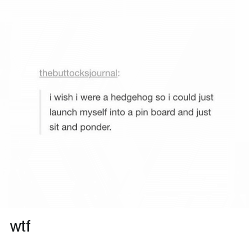 Hedgehoging: the buttocksjournal:  i wish i were a hedgehog so i could just  launch myself into a pin board and just  sit and ponder. wtf