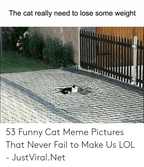 cat meme: The cat really need to lose some weight  JusViralNet 53 Funny Cat Meme Pictures That Never Fail to Make Us LOL - JustViral.Net