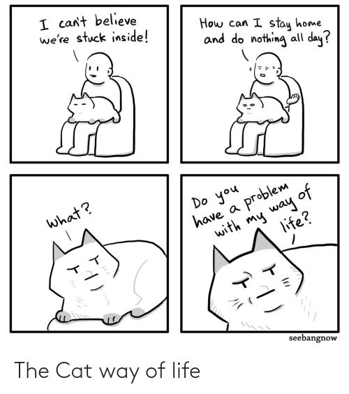 Life: The Cat way of life