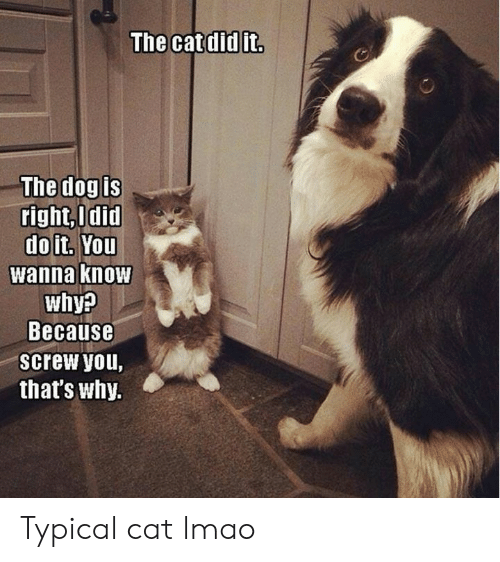 Lmao, Grumpy Cat, and Wanna Know: The catdid it.  The dog is  right,Odid  doit. You  wanna know  why?  Because  screw you,  that's why. Typical cat lmao
