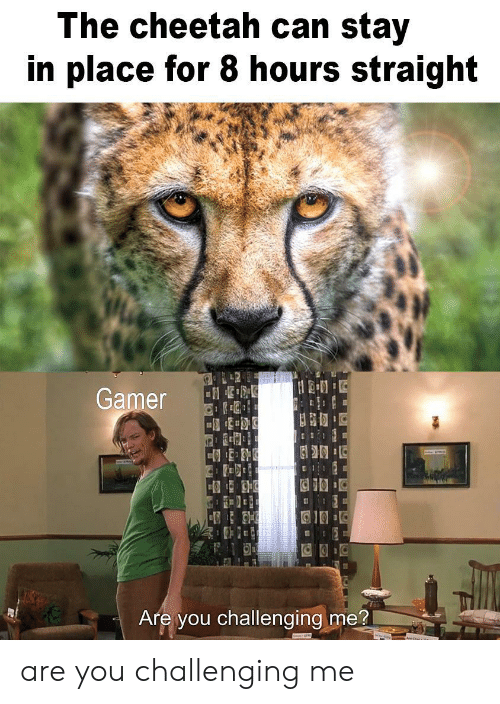 Cheetah, Can, and Gamer: The cheetah can stay  in place for 8 hours straight  L42  Gamer  Are you challenging me? are you challenging me