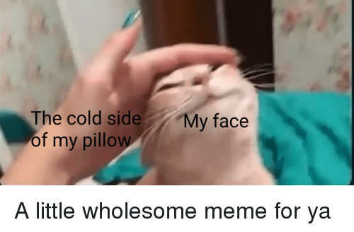 Meme, My Pillow, and Cold: The cold side My face  of my pillow A little wholesome meme for ya
