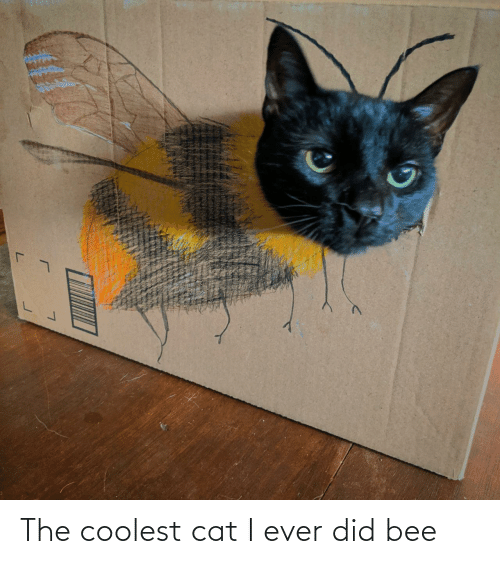 bee: The coolest cat I ever did bee