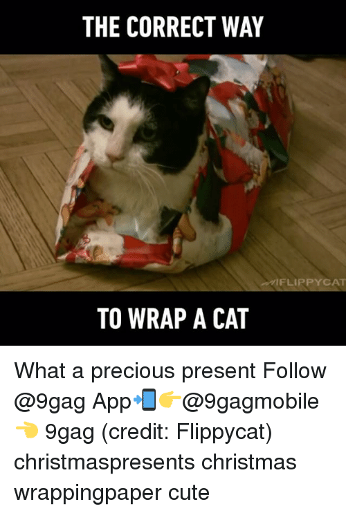 9gag, Memes, and Precious: THE CORRECT WAY  FLIP PYCAT  TO WRAP A CAT What a precious present Follow @9gag App📲👉@9gagmobile 👈 9gag (credit: Flippycat) christmaspresents christmas wrappingpaper cute