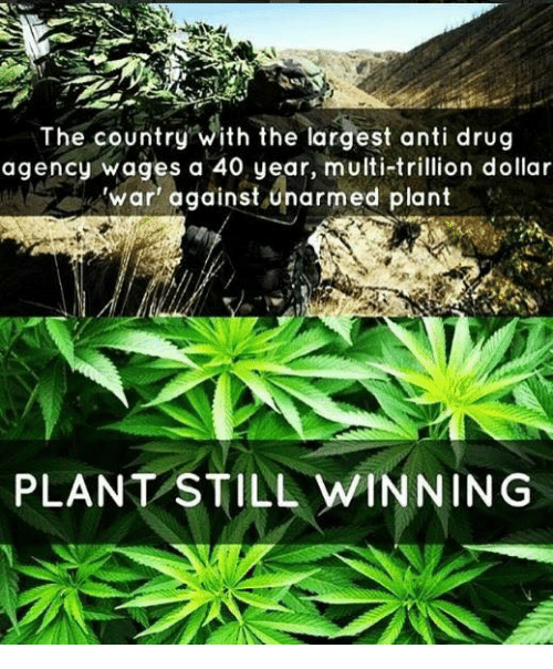 anti drug: The country with the largest anti drug  agency wages a 40 year, multi-trillion dollar  'war' against unarmed plant  PLANT STILL WINNING