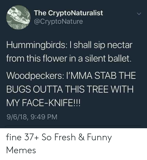 Hummingbirds: The CryptoNaturalist  @CryptoNature  VTONATURA  Hummingbirds: I shall sip nectar  from this flower in a silent ballet.  Woodpeckers: l'MMA STAB THE  BUGS OUTTA THIS TREE WITH  MY FACE-KNIFE!!!  9/6/18, 9:49 PM fine 37+ So Fresh & Funny Memes