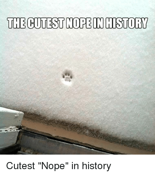 "History, Nope, and Cutest: THE CUTEST NOPE IN HISTORY Cutest ""Nope"" in history"