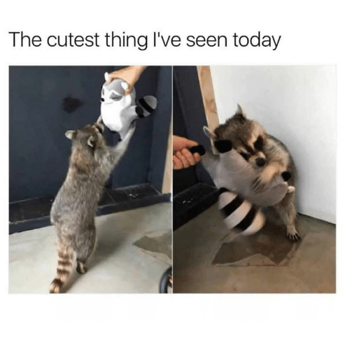 Dank, Today, and 🤖: The cutest thing I've seen today