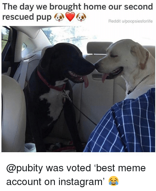 Instagram, Meme, and Memes: The day we brought home our second  rescued pup  Reddit u/poopsiesforlife @pubity was voted 'best meme account on instagram' 😂