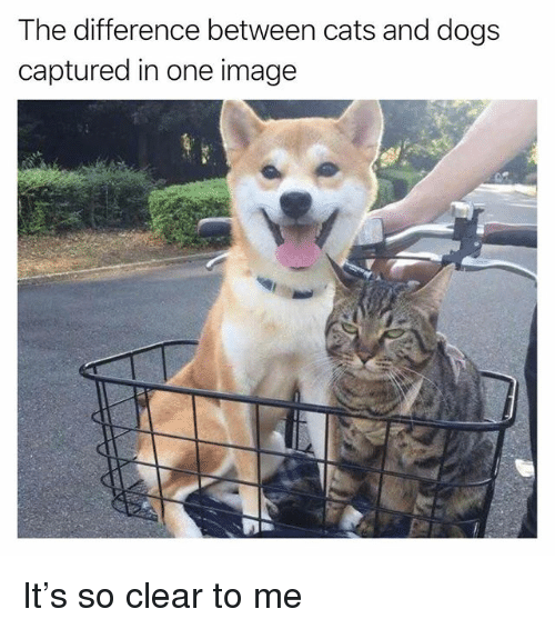 Cats, Dogs, and Funny: The difference between cats and dogs  captured in one image It's so clear to me