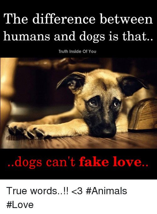 Animals, Dogs, and Fake: The difference between  humans and dogs is that..  Truth Inside Of You  dogs can't fake love True words..!! <3  #Animals #Love