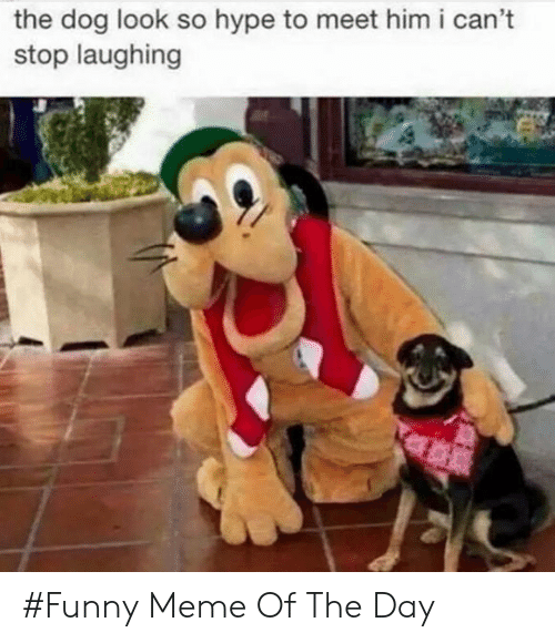 Funny, Hype, and Meme: the dog look so hype to meet him i can't  stop laughing #Funny Meme Of The Day