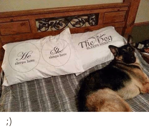 Memes, 🤖, and Dog: The Dog  sleeps here sleeps here ;)