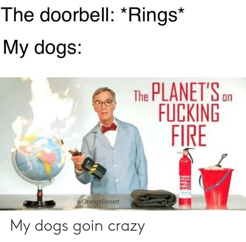"""Doorbell: The doorbell: """"Rings  My dogs:  The PLANETSn  FUCKING  FIRE  OrangeDesert My dogs goin crazy"""