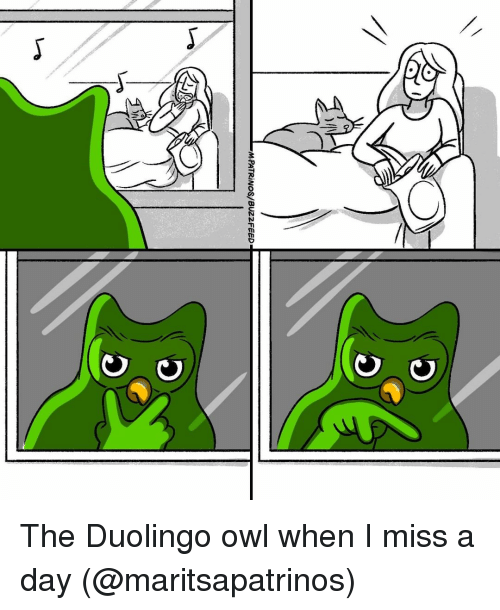 miss a: The Duolingo owl when I miss a day (@maritsapatrinos)