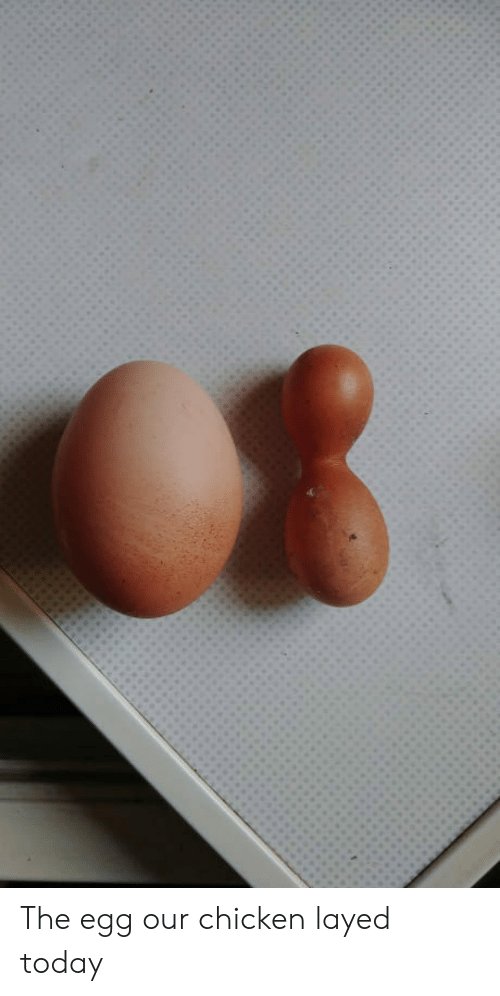 layed: The egg our chicken layed today