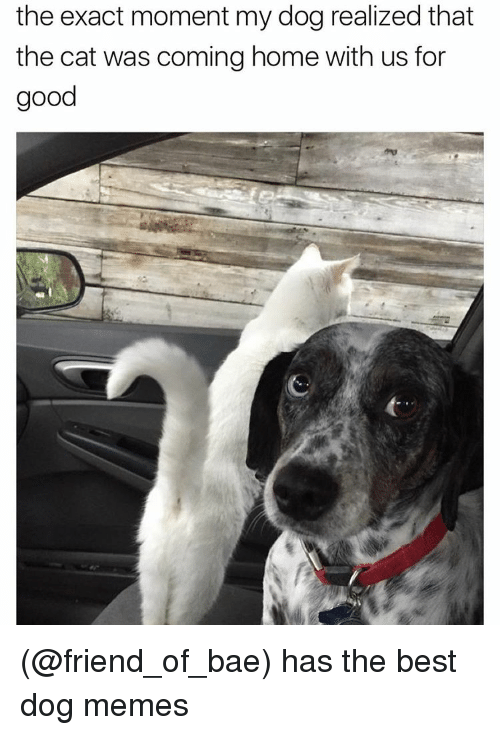 Bae, Cats, and Funny: the exact moment my dog realized that  the cat was coming home with us for  good (@friend_of_bae) has the best dog memes