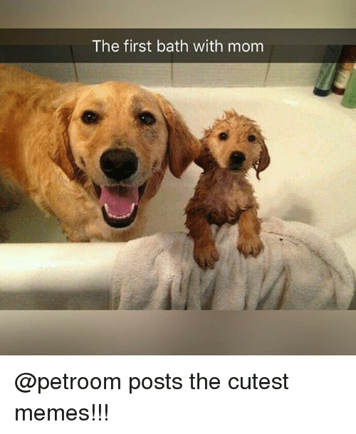Memes, Mom, and 🤖: The first bath with mom @petroom posts the cutest memes!!!