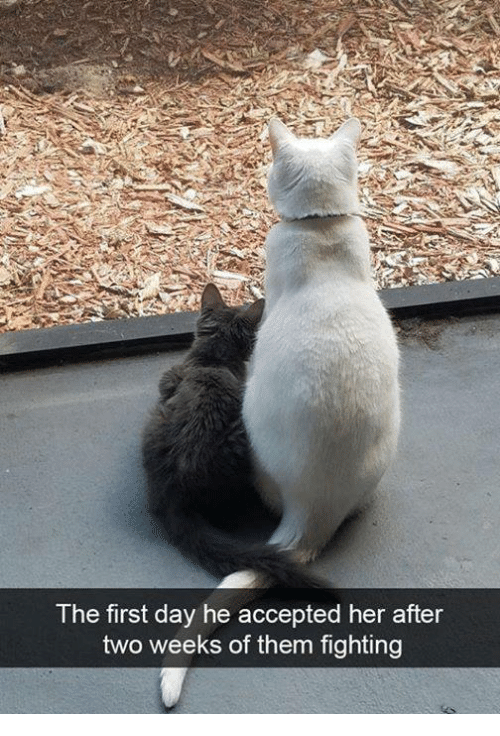 Memes, Accepted, and 🤖: The first day he accepted her after  two weeks of them fighting