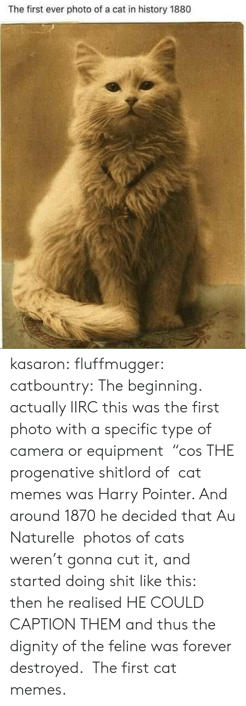 "dignity: The first ever photo of a cat in history 1880 kasaron: fluffmugger:  catbountry: The beginning. actually IIRC this was the first photo with a specific type of camera or equipment  ""cos THE progenative shitlord of  cat memes was Harry Pointer. And around 1870 he decided that Au Naturelle  photos of cats weren't gonna cut it, and started doing shit like this:  then he realised HE COULD CAPTION THEM and thus the dignity of the feline was forever destroyed.   The first cat memes."