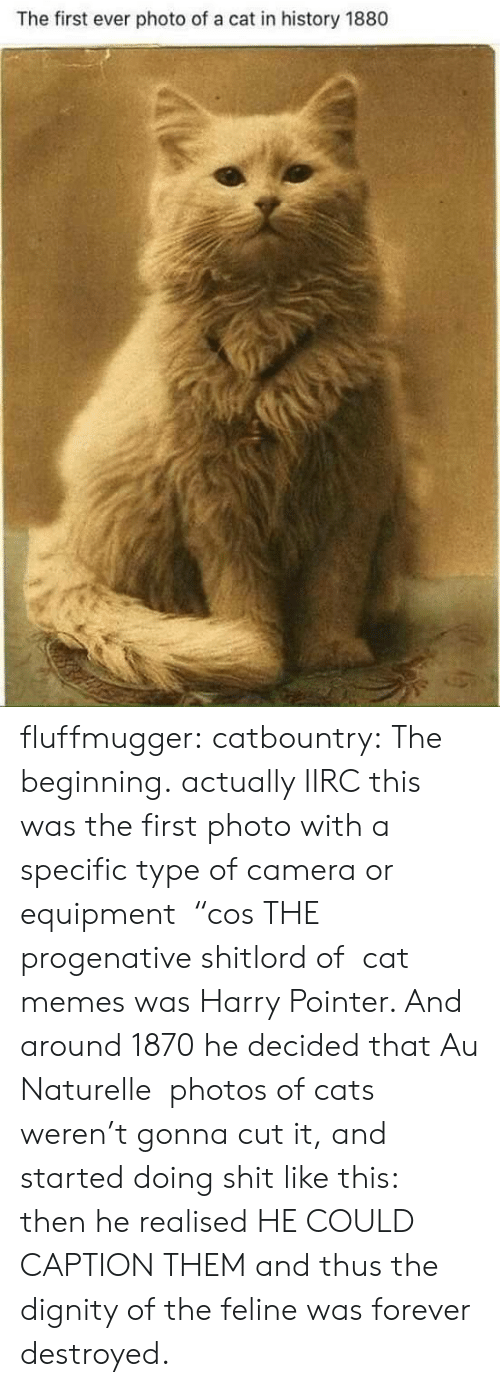 "dignity: The first ever photo of a cat in history 1880 fluffmugger: catbountry: The beginning. actually IIRC this was the first photo with a specific type of camera or equipment  ""cos THE progenative shitlord of  cat memes was Harry Pointer. And around 1870 he decided that Au Naturelle  photos of cats weren't gonna cut it, and started doing shit like this:  then he realised HE COULD CAPTION THEM and thus the dignity of the feline was forever destroyed."