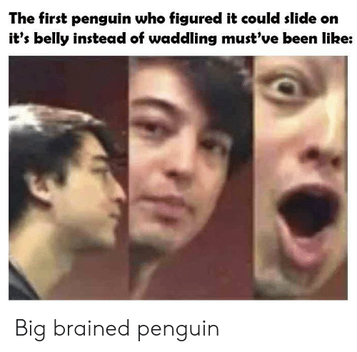 Penguin, Been, and Who: The first penguin who figured it could slide on  it's belly instead of waddling must've been like: Big brained penguin