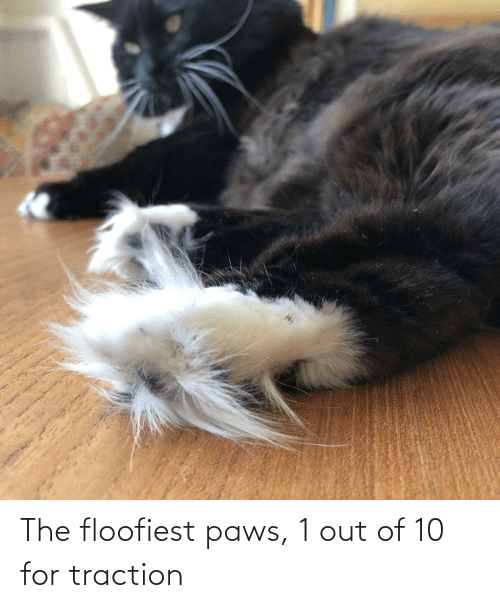 Paws: The floofiest paws, 1 out of 10 for traction