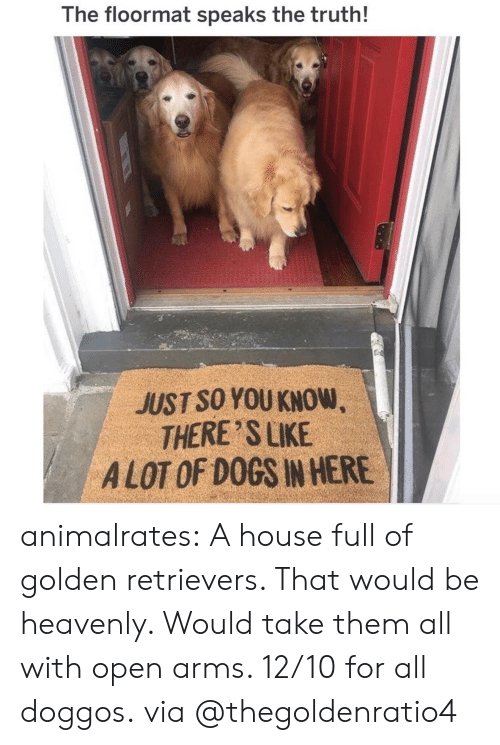 Dogs, Instagram, and Target: The floormat speaks the truth!  JUST SO YOU KNOW  THERE SLIKE  A LOT OF DOGS IN HERE animalrates: A house full of golden retrievers. That would be heavenly. Would take them all with open arms. 12/10 for all doggos. via @thegoldenratio4