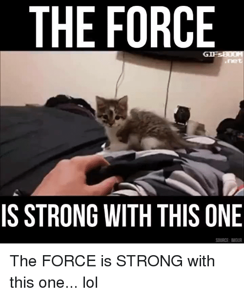 Force Is Strong: THE FORCE  IS STRONG WITH THIS ONE  SOURCE: IMGUR The FORCE is STRONG with this one... lol