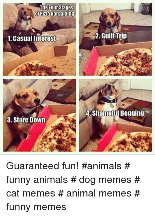 Funny animals: The Four Stages  of Pizza Bargaining  1, Casual Interest  2. Guilt Trin  A Shameful Begging  3. Stare Down Guaranteed fun! #animals # funny animals # dog memes # cat memes # animal memes # funny memes
