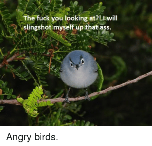 slingshot: The fuck you looking at?Iwill  slingshot myself up that ass. <p>Angry birds.</p>