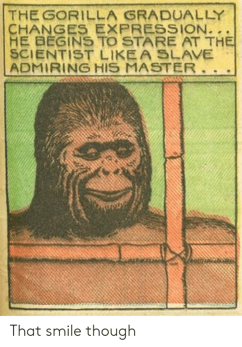 admiring: THE GORILLA GRADUALLY  HE BEGINS TO STARE AT TH  SCIENTIST LIKEA SLAVE  ADMIRING HIS MASTER That smile though