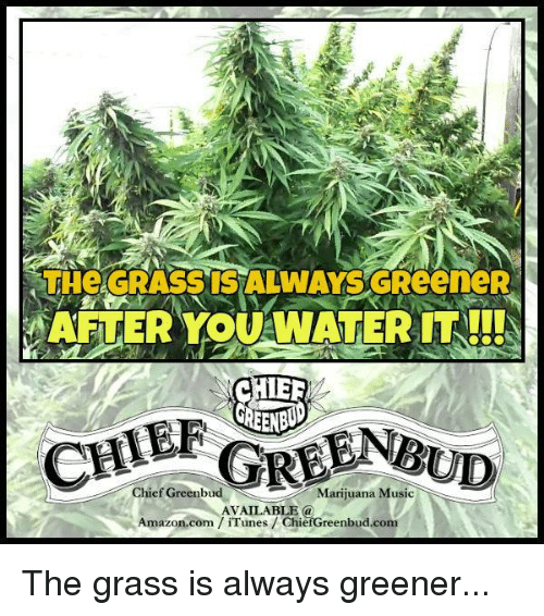 Grass Is Always Greener: THE GRASS IS ALWWAYSGReeneR  AFTER YOUAWATER IT!!!S  CHER  GREEN  GREEN  Chief Greenbu  Marijuana Music  AVAILABLE a  Amazon.com iTunes ChiefGreenbud.com The grass is always greener...
