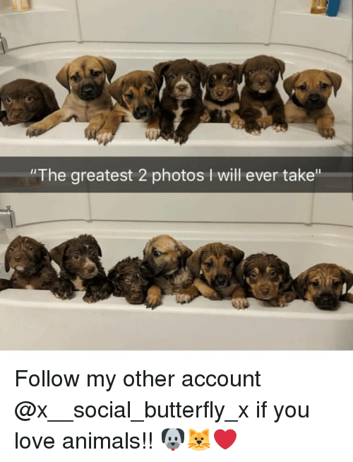 """Love Animals: """"The greatest 2 photos I will ever take"""" Follow my other account @x__social_butterfly_x if you love animals!! 🐶🐱❤"""