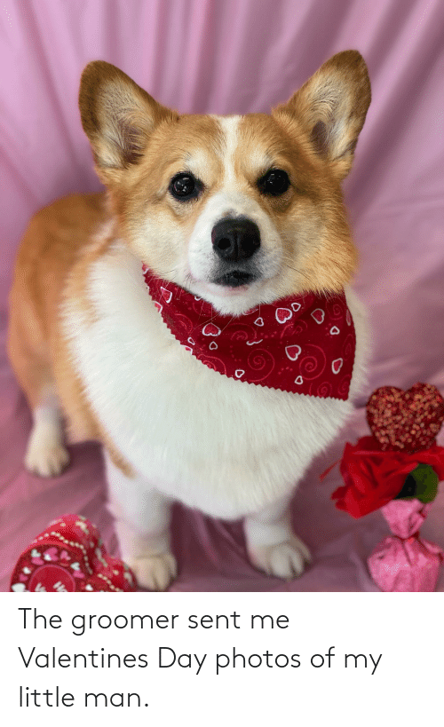 Aww Memes: The groomer sent me Valentines Day photos of my little man.