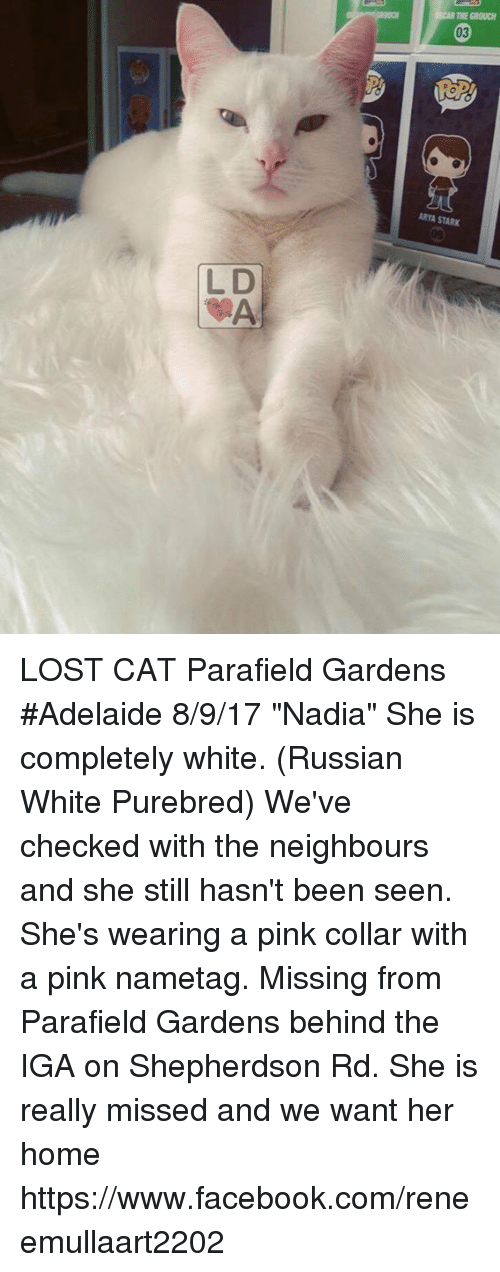 """Facebook, Memes, and Lost: THE GROUCS  03  ARYA STARK  L D LOST CAT Parafield Gardens #Adelaide 8/9/17  """"Nadia"""" She is completely white. (Russian White Purebred) We've checked with the neighbours and she still hasn't been seen. She's wearing a pink collar with a pink nametag. Missing from Parafield Gardens behind the IGA on Shepherdson Rd.  She is really missed and we want her home  https://www.facebook.com/reneemullaart2202"""