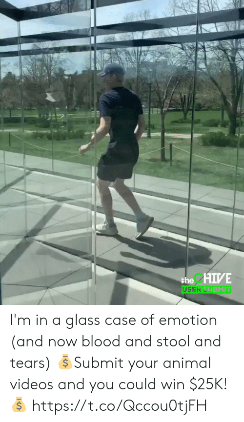 Animal Videos: the HIVE  USER SLIBMIT I'm in a glass case of emotion (and now blood and stool and tears) 💰Submit your animal videos and you could win $25K!💰 https://t.co/Qccou0tjFH
