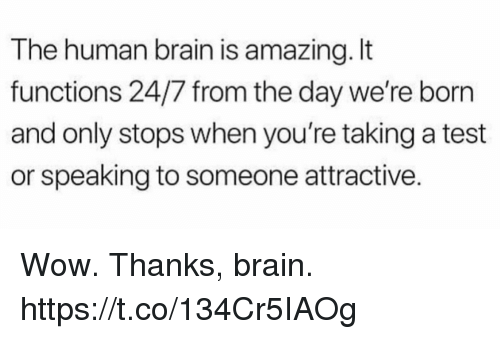 Funny, Wow, and Brain: The human brain is amazing. It  functions 24/7 from the day we're born  and only stops when you're taking a test  or speaking to someone attractive. Wow. Thanks, brain. https://t.co/134Cr5IAOg