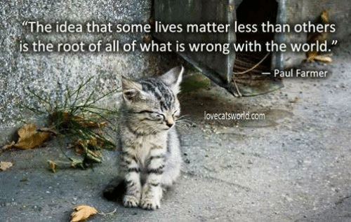 """Memes, What Is, and World: """"The idea that some lives matter less than others  is the root of all of what is wrong with the world.""""  Paul Farmer  lovecatsworld.com"""