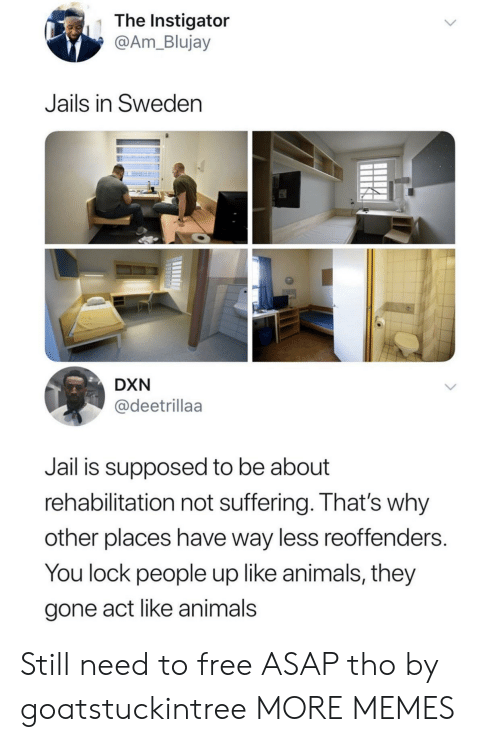 Animals, Dank, and Jail: The Instigator  @Am_Blujay  Jails in Sweden  DXN  @deetrillaa  Jail is supposed to be about  rehabilitation not suffering. That's why  other places have way less reoffenders.  You lock people up like animals, they  gone act like animals Still need to free ASAP tho by goatstuckintree MORE MEMES