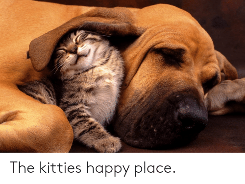 Kitties, Happy, and Happy Place: The kitties happy place.