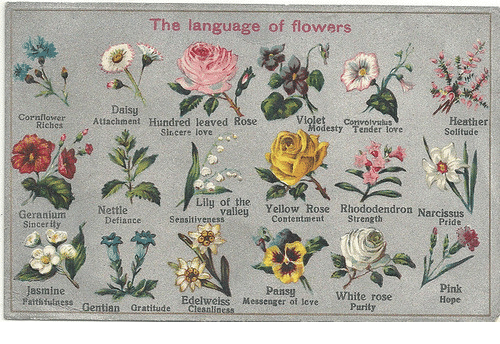 jasmine: The language of flowers  Attachment Hundred leaved aose  Daisy  wH  Heather  Solitude  Violet Convolyalus  Cornflower  odesty Tender lore  Sincere love  i Yellow Rose Riododendron Narcssdis  Nettle  Pride  Geranium  Sincerity  ContentmentStrength  DefianceSeasitiyeness  Pansy  Messenger of tove  Pink  Hope  Jasmine  atsthilness Gentian Gratitude Clesnliness  Edelweiss  Purily